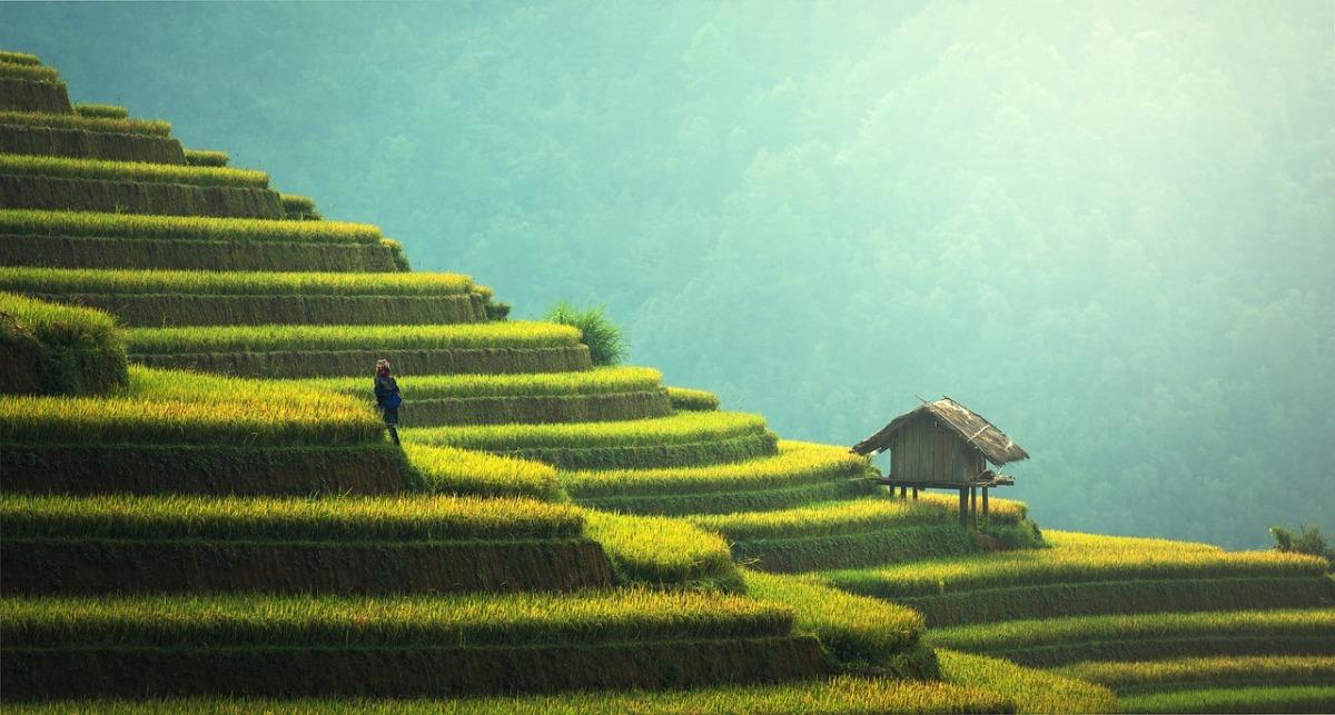 Prezzemolo&Cilantro, un romanzo sulla comunità italiana in Cina